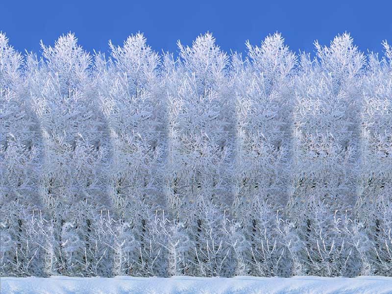 snowmen800